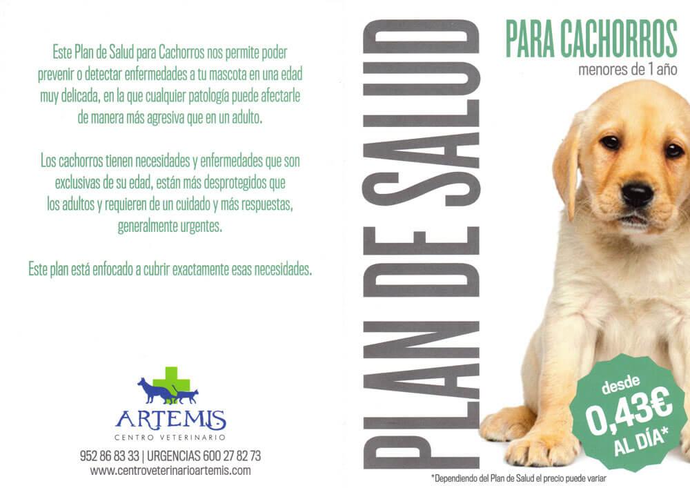 Plan de salud para perros cachorros - Centro Veterinario Artemis